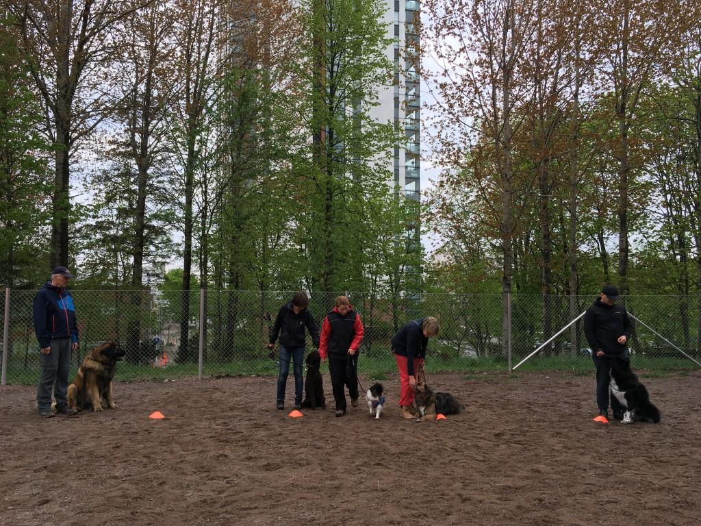 Ohituskurssilla tehdään mm. toisten koirien pujotteluharjoitusta.